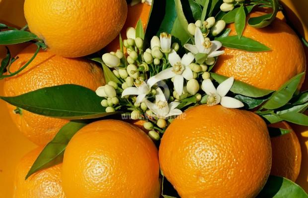 Портокалите помагат в битката с излишните мазнини