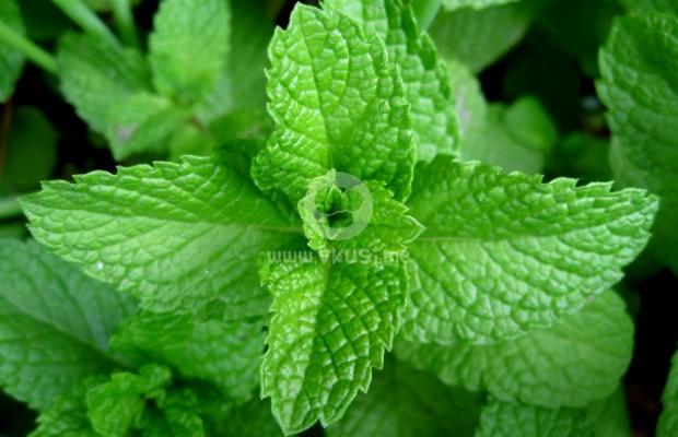 10 от най-полезните за стомаха билки