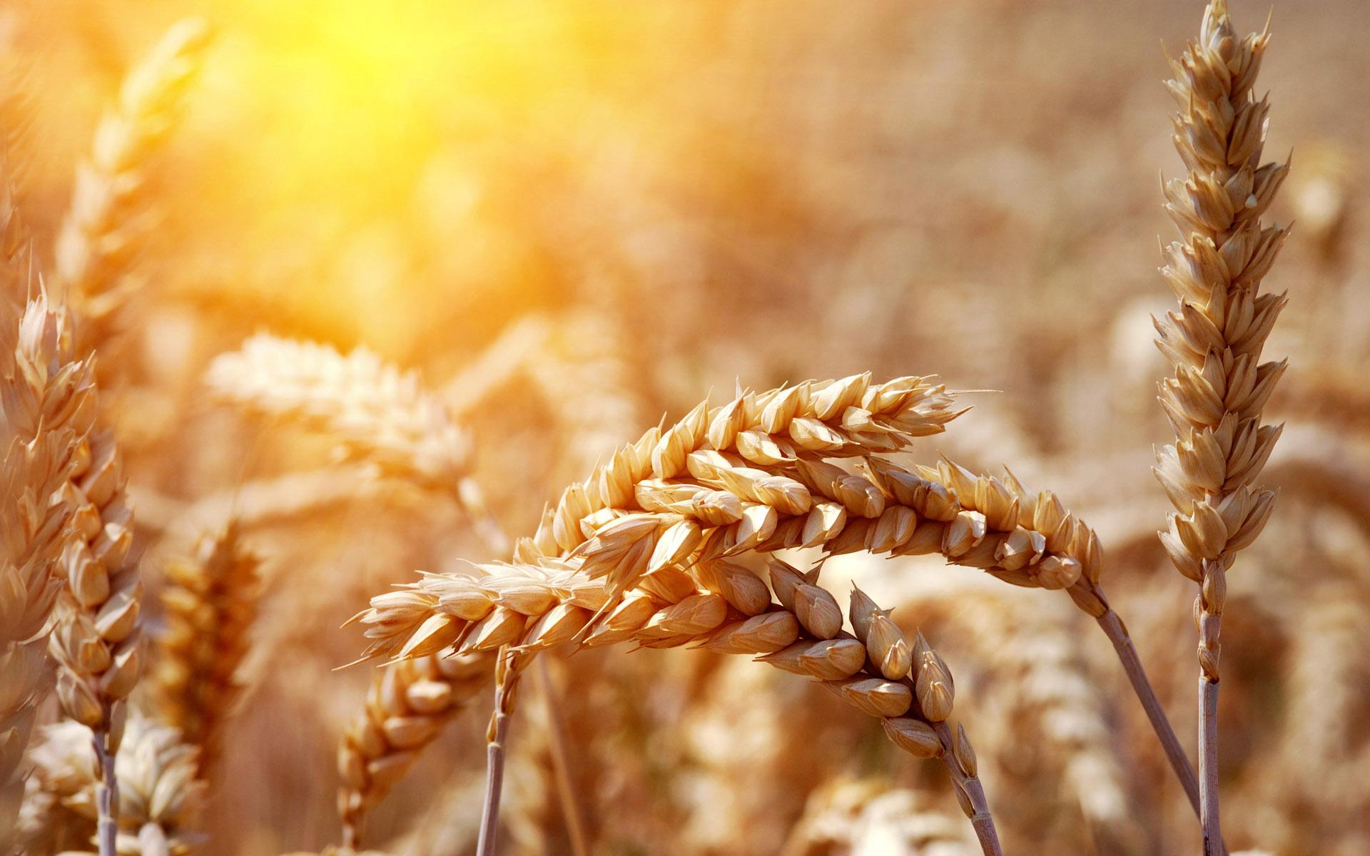 Зърнените храни влизат в битката с рака