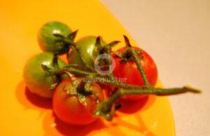 trakiiska-salata-3